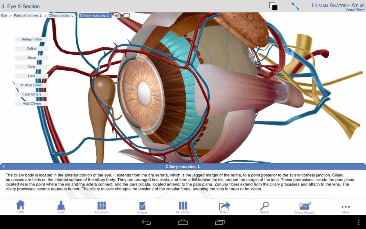 Human Anatomy Atlas Eye